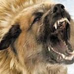 нападения бродячих собак