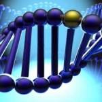 ген, наследственность